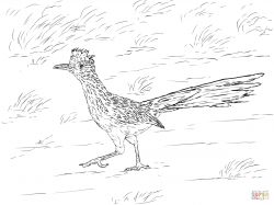 Roadrunner clipart coloring page