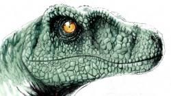 Drawn velociraptor jurassic park velociraptor