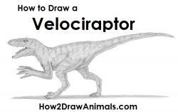Drawn velociraptor raptor