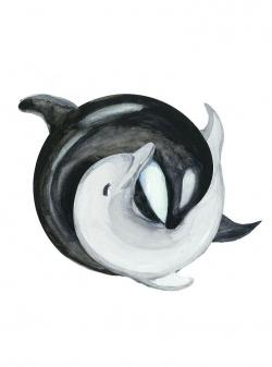 Drawn dolphins killer whale