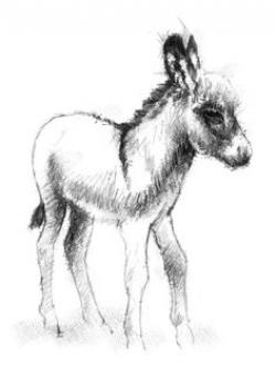 Drawn donkey