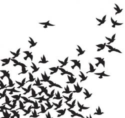 Flock Of Birds clipart flock crows