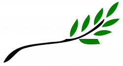 Herbivorous clipart olive branch