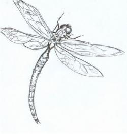Drawn dragonfly