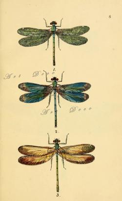 Drawn dragonfly scientific