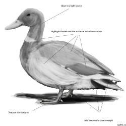 Drawn duckling realistic