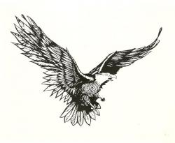 Drawn eagle eagle fly