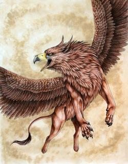 Drawn griffon mythical animal