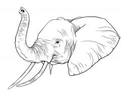 Drawn elephant elephant trunk