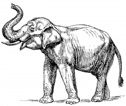 Asian Elephant clipart outline drawing