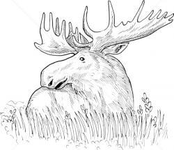 Drawn elk moose
