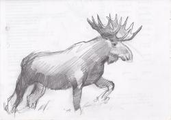 Drawn moose sketch