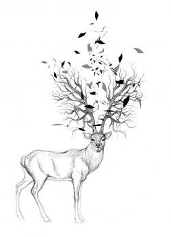 Drawn stag tree antler