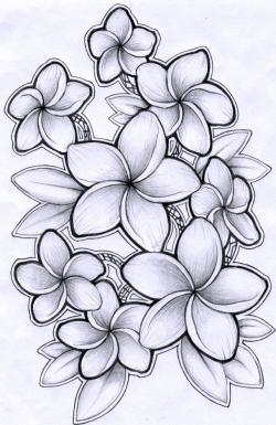 Drawn flower frangipani