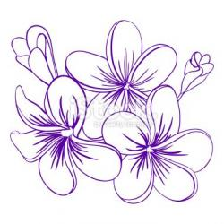 Plumeria clipart flower drawing