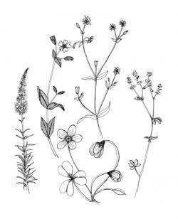 Drawn wildflower different flower