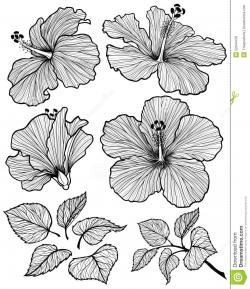 Drawn hibiscus graphic