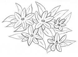 Drawn elower jasmine flower