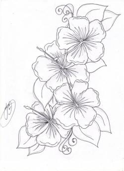 Drawn hibiscus hawaiian flower