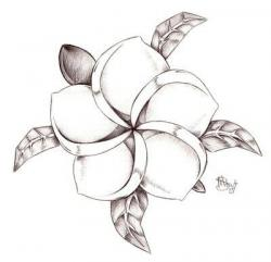 Drawn elower plumeria flower