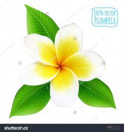 Frangipani clipart rainbow flower