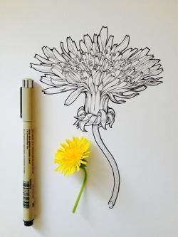 Drawn flower scientific