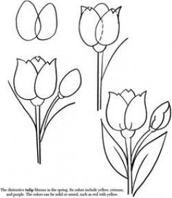 Drawn tulip detail drawing