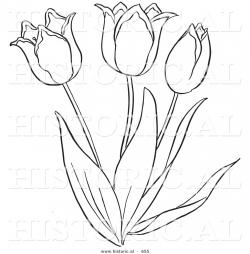 Drawn tulip tulip flower