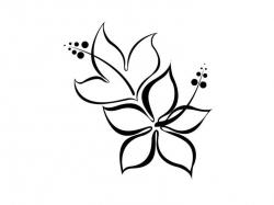 Drawn hibiscus simple
