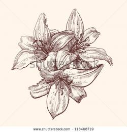 Drawn vintage flower lily