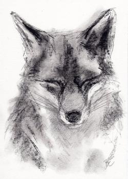 Drawn fox profile