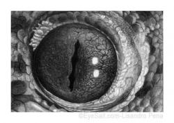 Drawn eye reptile