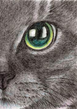 Drawn feline original