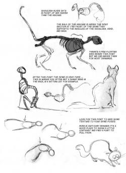 Drawn feline anatomy