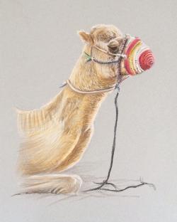Drawn llama pastel