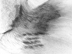 Drawn fur Drawing Cat Fur