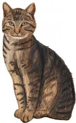 Tabby Cat clipart realistic cat