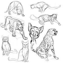 Drawn feline study