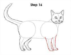 Drawn feline tabby