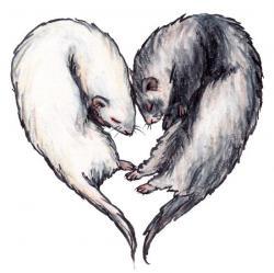 Drawn ferret i love