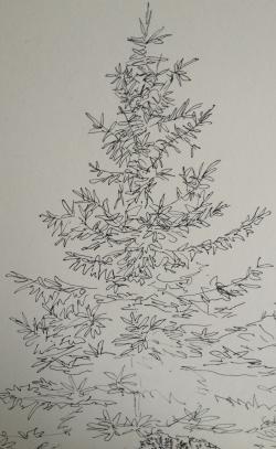 Drawn fir tree bare
