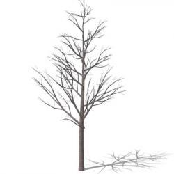 Drawn pine tree bare