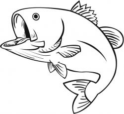 Drawn fish