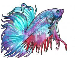 Betta clipart color fish