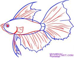 Drawn fish betta fish