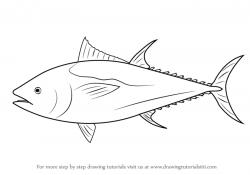 Drawn fish bluefin tuna
