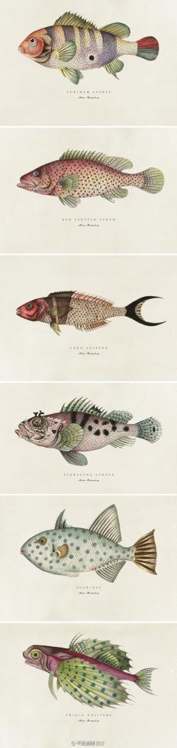 Drawn fishing illustrated