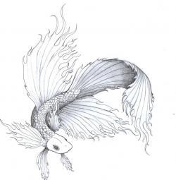 Drawn fish siamese fighting fish