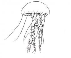 Drawn jellies simple