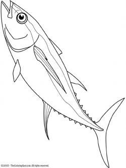 Drawn fishing tuna